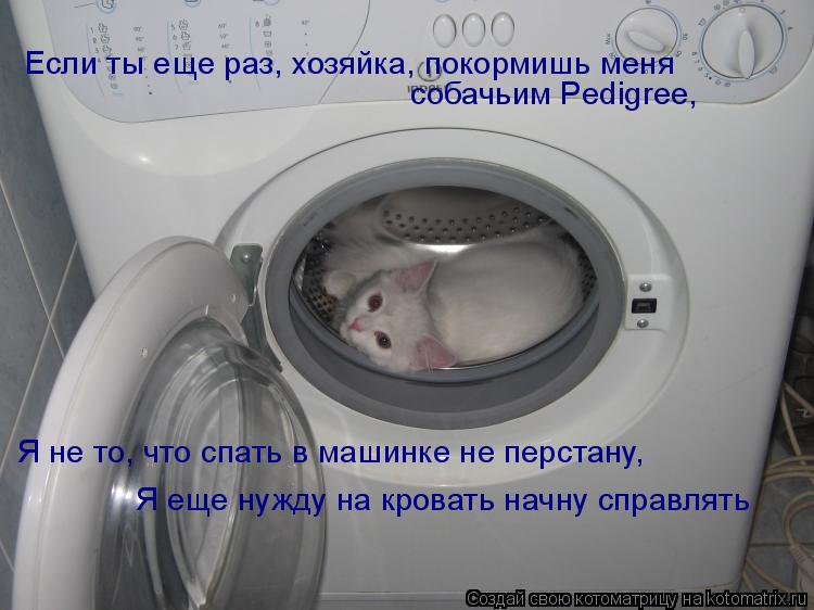 Котоматрица: Если ты еще раз, хозяйка, покормишь меня  собачьим Pedigree,   Я не то, что спать в машинке не перстану, Я еще нужду на кровать начну справлять