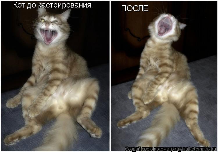 Котоматрица: Кот до кастрирования ПОСЛЕ