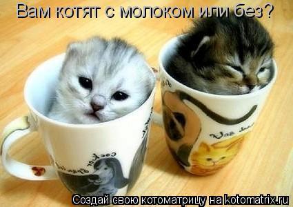 Котоматрица: Вам котят с молоком или без?