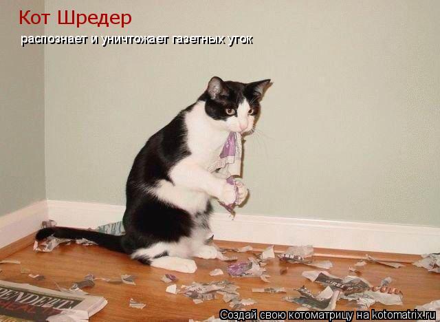 Котоматрица: Кот Шредер  распознает и уничтожает газетных уток