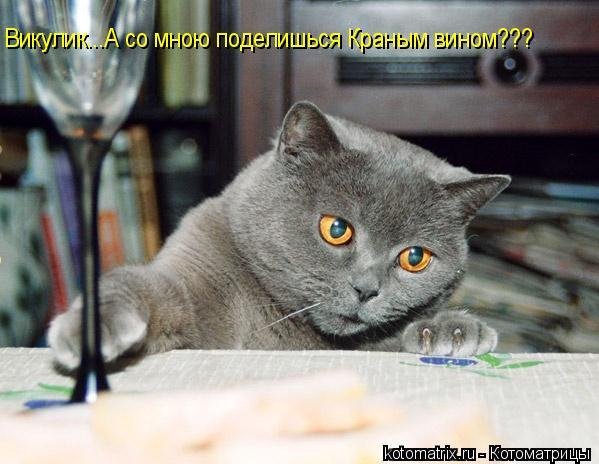 Котоматрица: Викулик...А со мною поделишься Краным вином???