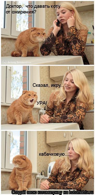 Котоматрица: Доктор,  что давать коту от ожирения? Сказал, икру... УРА! кабачковую...