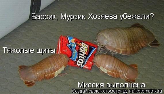 Котоматрица: Барсик, Мурзик  Миссия выполнена Тяжолые щиты Хозяева убежали?