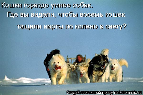Котоматрица: Кошки гораздо умнее собак. Где вы видели, чтобы восемь кошек тащили нарты по колено в снегу?