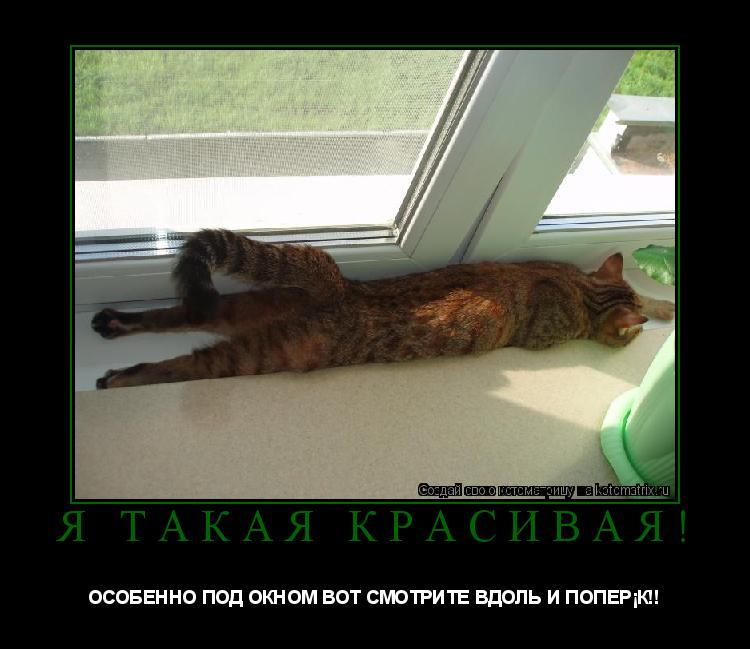 Котоматрица: Я ТАКАЯ КРАСИВАЯ! ОСОБЕННО ПОД ОКНОМ ВОТ СМОТРИТЕ ВДОЛЬ И ПОПЕРЁК!!