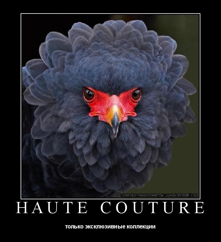 Котоматрица: Haute couture  только эксклюзивные коллекции