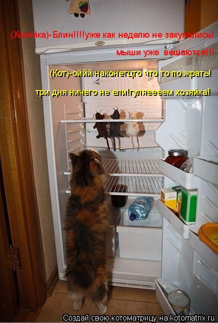 Котоматрица: (Хозяйка)-Блин!!!!уже как неделю не закупались! мыши уже  вешаются!!! (Кот)-оййй наконетцто что то по жрать! три дня ничего не ели!гуляеееем хозя
