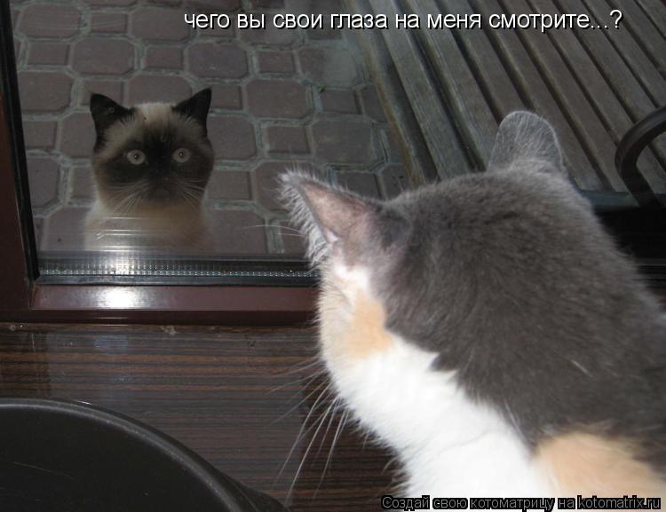 Котоматрица: чего вы свои глаза на меня смотрите...?