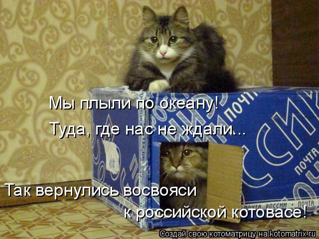 Котоматрица: Мы плыли по океану! Туда, где нас не ждали... Так вернулись восвояси  к российской котовасе!