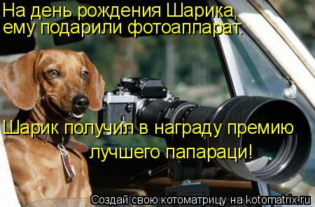 Котоматрица: На день рождения Шарика,  ему подарили фотоаппарат.  Шарик получил в награду премию  лучшего папараци!