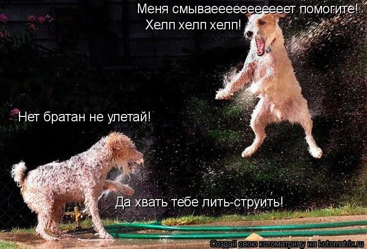 Котоматрица: Меня смываееееееееееет помогите! Хелп хелп хелп! Нет братан не улетай! Да хвать тебе лить-струить!