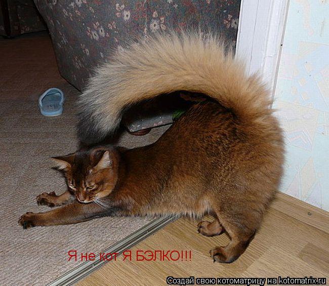 Котоматрица: Я не кот Я БЭЛКО!!!