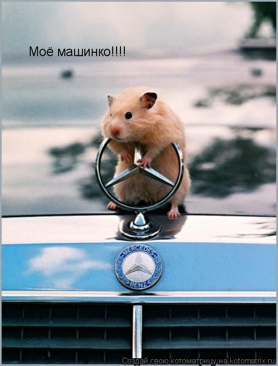 Котоматрица: Моё машинко!!!!