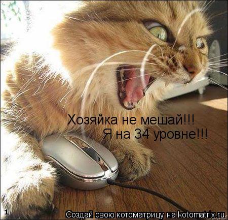 Котоматрица: Хозяйка не мешай!!! Я на 34 уровне!!!