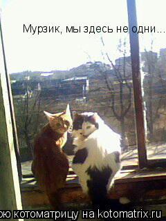 Котоматрица: Мурзик, мы здесь не одни...