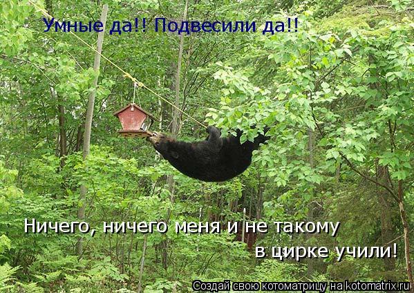 Котоматрица: Умные да!! Подвесили да!! Ничего, ничего меня и не такому в цирке учили!