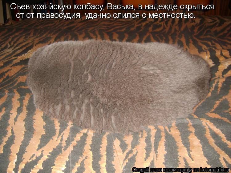 Котоматрица: Съев хозяйскую колбасу, Васька, в надежде скрыться от от правосудия, удачно слился с местностью.