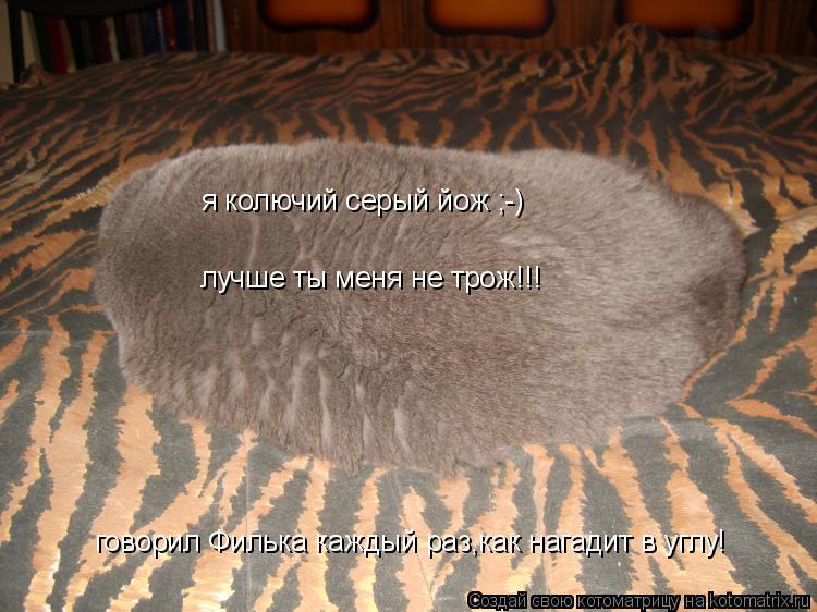 Котоматрица: я колючий серый йож ;-) лучше ты меня не трож!!! говорил Филька каждый раз,как нагадит в углу!
