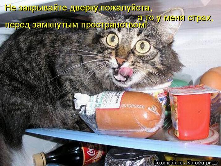 Котоматрица: Не закрывайте дверку,пожалуйста, а то у меня страх, перед замкнутым пространством!