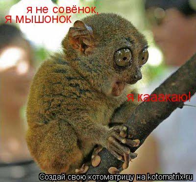 Котоматрица: я мышонок я кааакаю! я не совёнок,