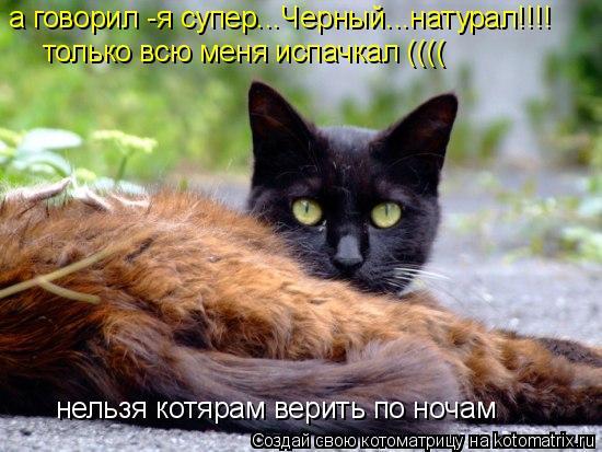 Котоматрица: а говорил -я супер...Черный...натурал!!!! только всю меня испачкал (((( нельзя котярам верить по ночам