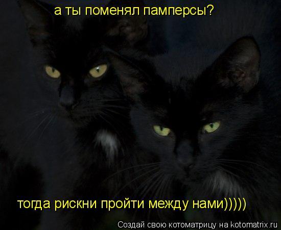 Котоматрица: а ты поменял памперсы? тогда рискни пройти между нами)))))