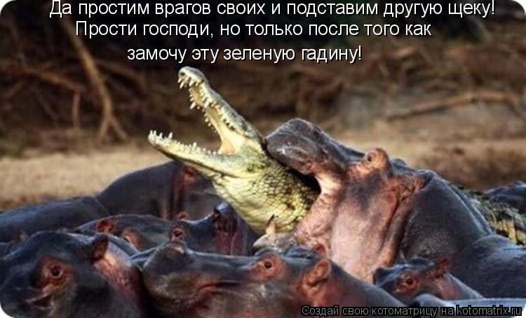 Котоматрица: Да простим врагов своих и подставим другую щеку! Прости господи, но только после того как  замочу эту зеленую гадину!