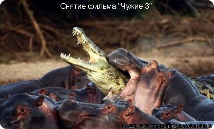 """Котоматрица: Снятие фильма """"Чужие 3"""""""