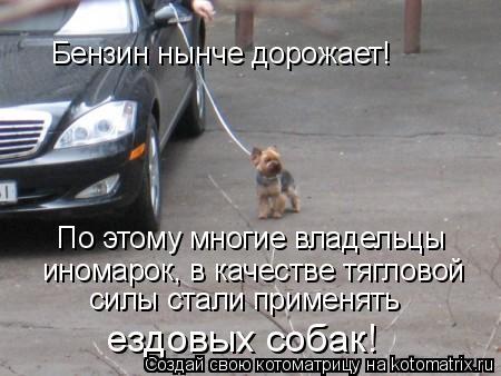 Котоматрица: Бензин нынче дорожает! По этому многие владельцы  иномарок, в качестве тягловой  силы стали применять  ездовых собак!