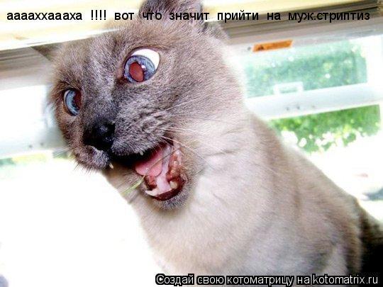 Котоматрица: ааааххаааха  !!!!  вот  что  значит  прийти  на  муж.стриптиз