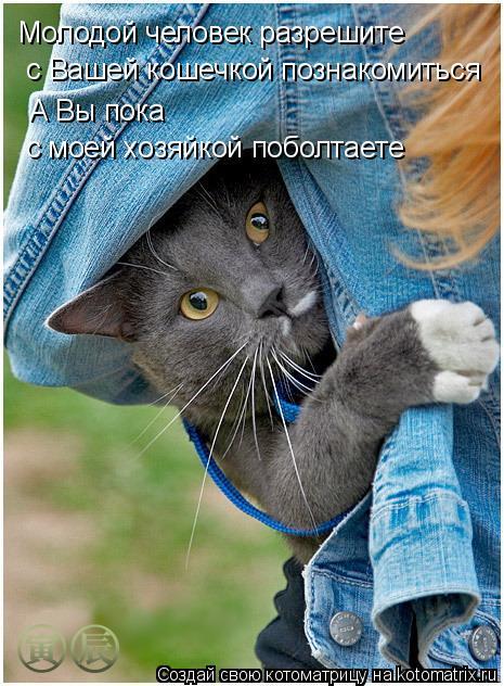 Котоматрица: Молодой человек разрешите  с Вашей кошечкой познакомиться А Вы пока  с моей хозяйкой поболтаете