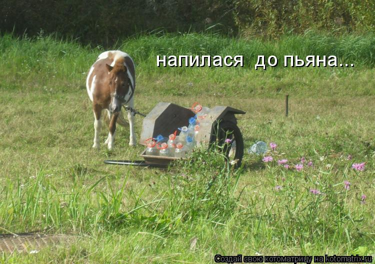 Котоматрица: напилася  до пьяна...