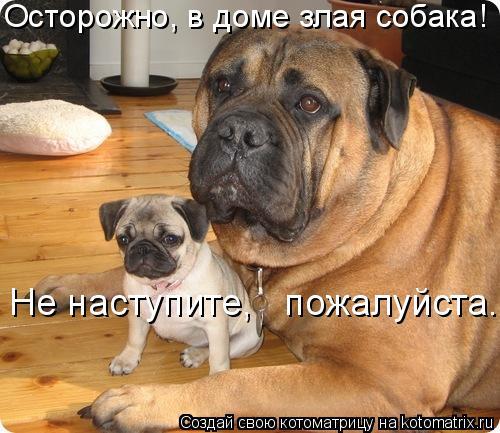 Котоматрица: Осторожно, в доме злая собака! Не наступите,   пожалуйста.