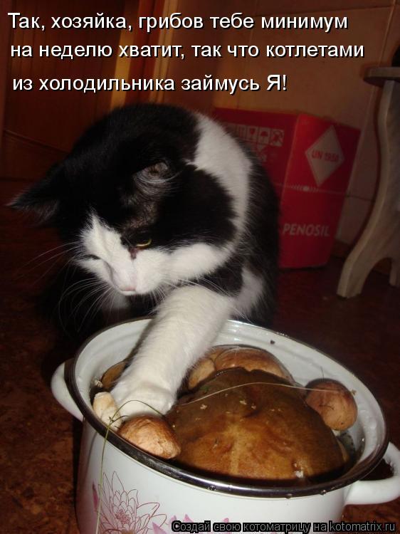 Котоматрица: Так, хозяйка, грибов тебе минимум на неделю хватит, так что котлетами из холодильника займусь Я!