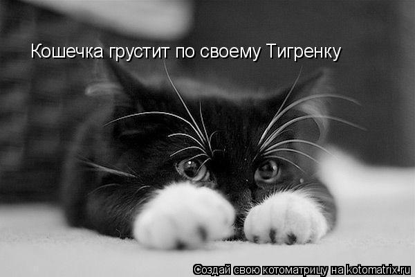 Котоматрица: Кошечка грустит по своему Тигренку