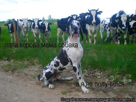 Котоматрица: папа корова,мама собака а я не получился