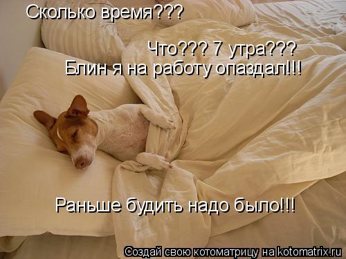 Котоматрица: Сколько время??? Что??? 7 утра??? Блин я на работу опаздал!!! Раньше будить надо было!!!