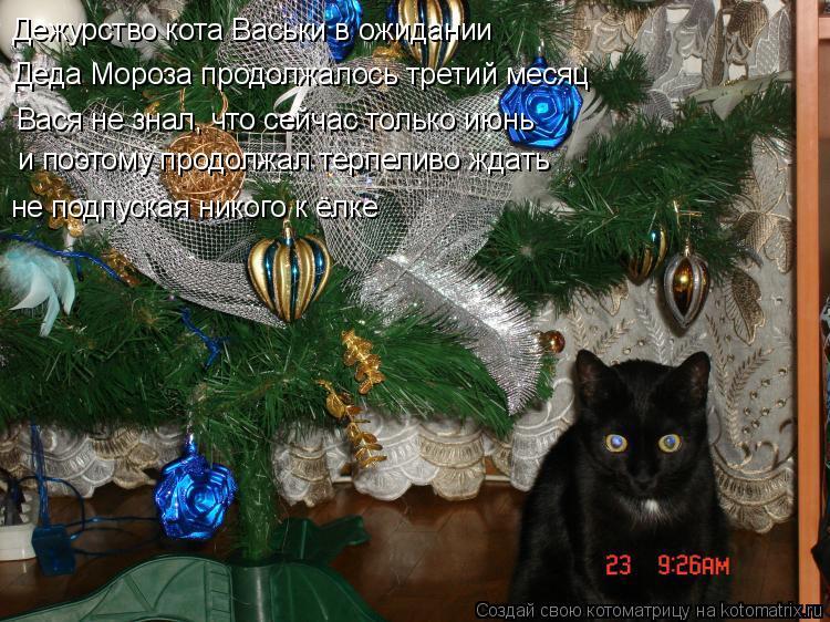 Котоматрица: Дежурство кота Васьки в ожидании  Деда Мороза продолжалось третий месяц Вася не знал, что сейчас только июнь и поэтому продолжал терпеливо