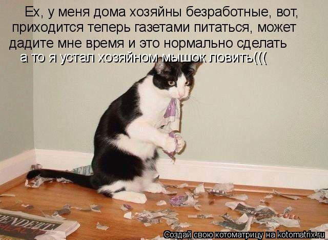 Котоматрица: Ех, у меня дома хозяйны безработные, вот, приходится теперь газетами питаться, может Ех, у меня дома хозяйны безработные, вот,  приходится те
