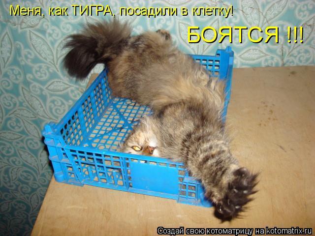 Котоматрица: Меня, как ТИГРА, посадили в клетку! БОЯТСЯ !!!