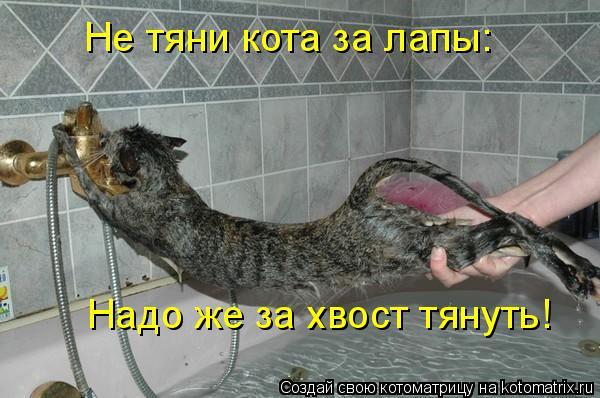 Котоматрица: Не тяни кота за лапы: Не тяни кота за лапы: Надо же за хвост тянуть!