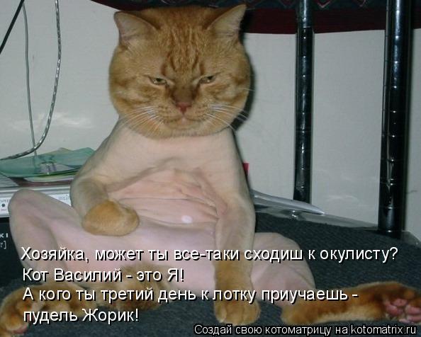 Котоматрица: Хозяйка, может ты все-таки сходиш к окулисту? Кот Василий - это Я! А кого ты третий день к лотку приучаешь -  пудель Жорик!