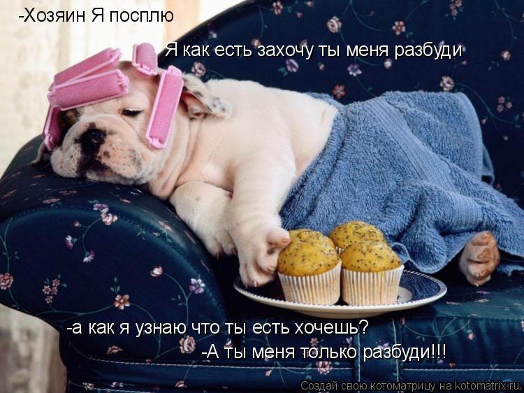 Котоматрица: Я как есть захочу ты меня разбуди -а как я узнаю что ты есть хочешь? -Хозяин Я посплю  -А ты меня только разбуди!!!