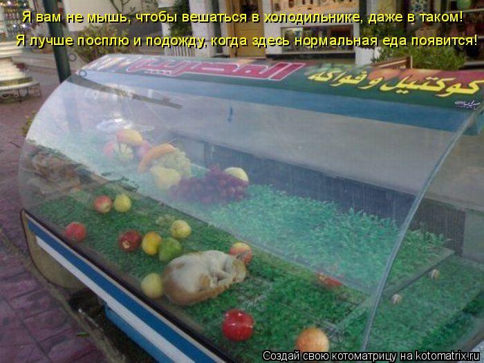 Котоматрица: Я вам не мышь, чтобы вешаться в холодильнике, даже в таком! Я лучше посплю и подожду, когда здесь нормальная еда появится!