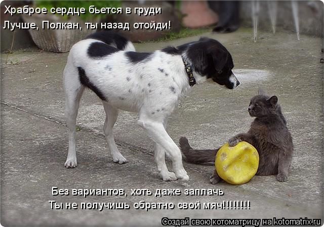 Котоматрица: Храброе сердце бьется в груди Лучше, Полкан, ты назад отойди! Без вариантов, хоть даже заплачь Ты не получишь обратно свой мяч!!!!!!!!