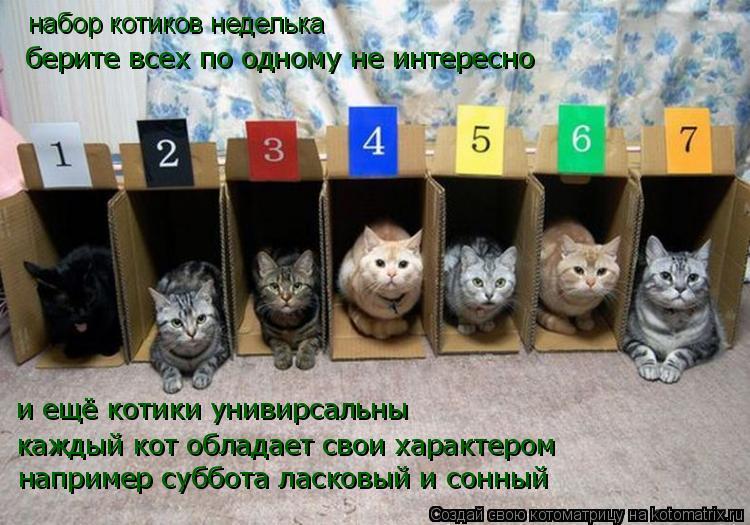 Котоматрица: набор котиков неделька берите всех по одному не интересно и ещё котики унивирсальны каждый кот обладает свои характером например суббота
