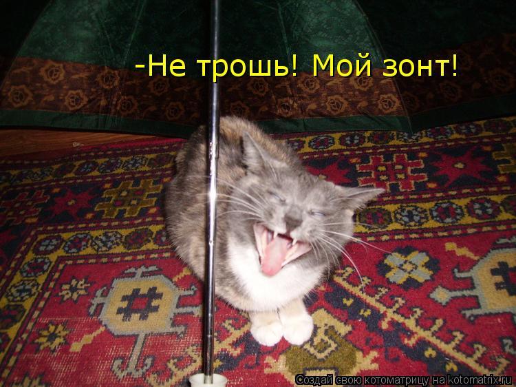 Котоматрица: -Не трошь! Мой зонт!