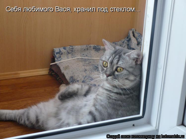 Котоматрица: Себя любимого Вася, хранил под стеклом...