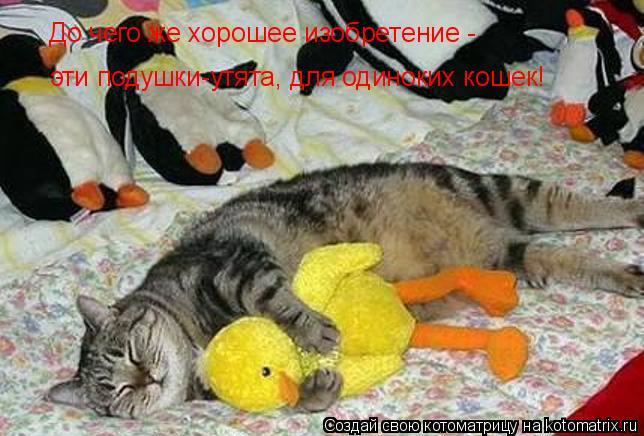 Котоматрица: До чего же хорошее изобретение -  эти подушки-утята, для одиноких кошек!