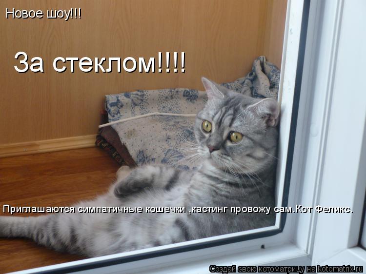 Котоматрица: Новое шоу!!! За стеклом!!!! Приглашаются симпатичные кошечки ,кастинг провожу сам.Кот Феликс.